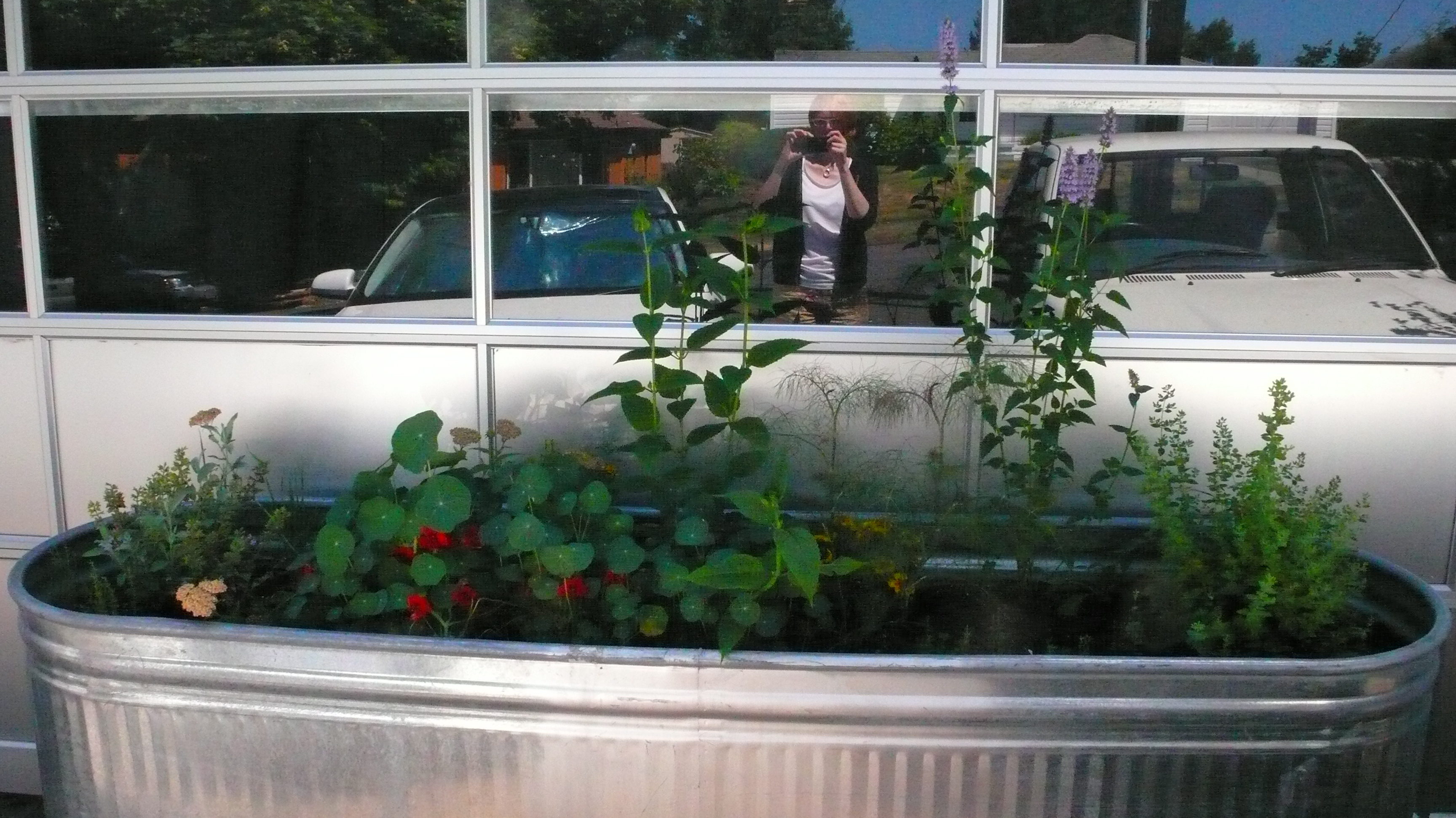 Kitchen Garden Trough A Kitchen And Garden In Portland A Herb Garden We Like To Cook